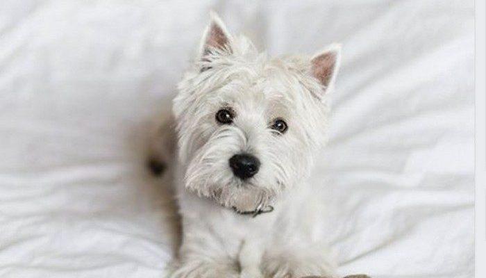 Пёс грыз исключительно плюшевых зайцев из IKEA, но их больше не производят. Пользователи соцсетей готовы прислать опечаленной собаке своих зайцев!