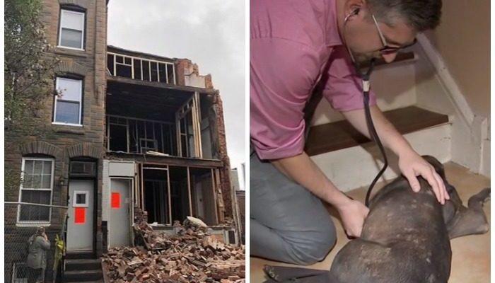 Два дня пёс пролежал под обрушившейся стеной, но выжил!