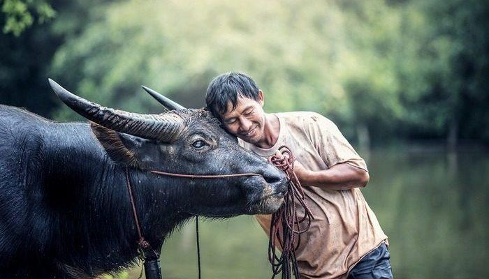 Дружба буйвола и фермера тронула сердца пользователей Фейсбука. Они даже собрали крупную сумму, чтобы друзья не расстались