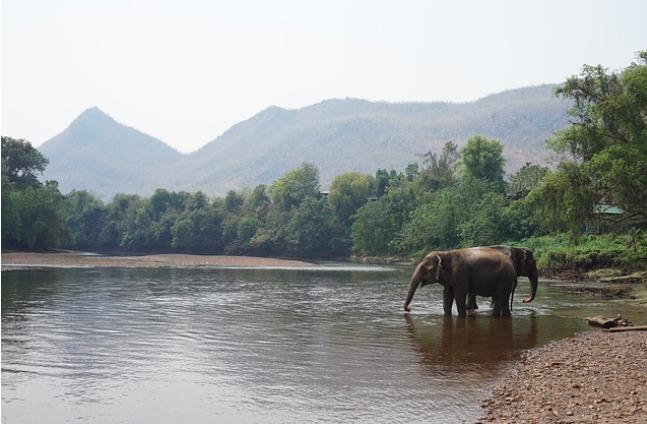 (Видео) Слон бросился на помощь своему смотрителю, которого «атаковали»