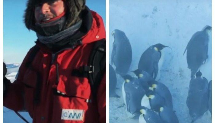Съёмочная группа «Би-би-си» спасла пингвинов в Антарктиде. Вопреки принятым правилам невмешательства в природу