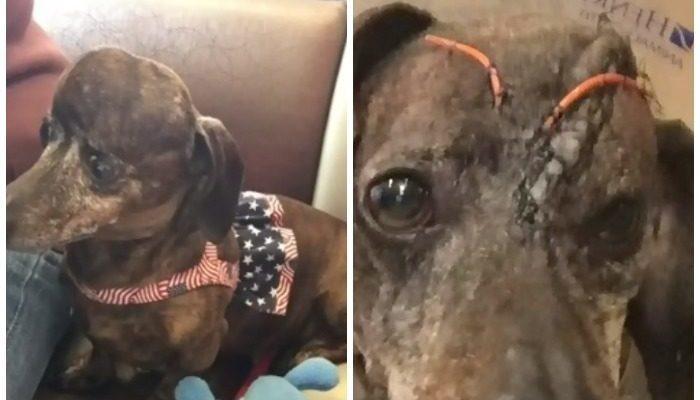 Собаке удалили опухоль мозга и 70% черепа. Утраченную кость напечатали на 3D-принтере из титана!