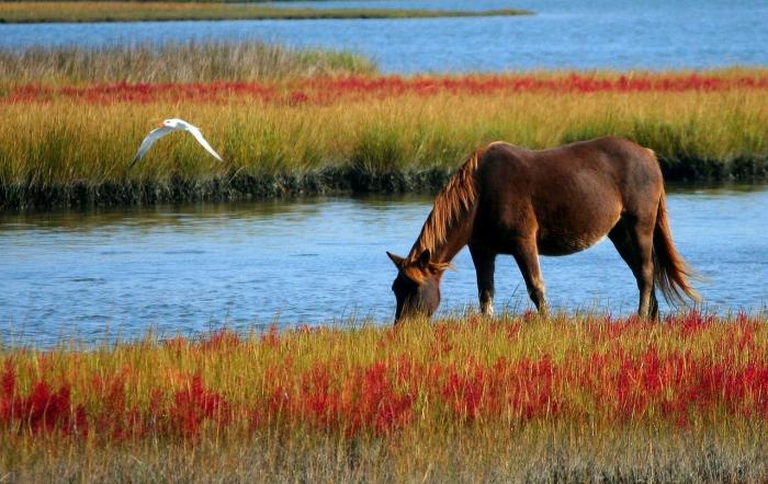 Одиночество терзало душу молодой несчастной женщины и брошенной умирать лошади. Их встреча изменила жизнь обеих