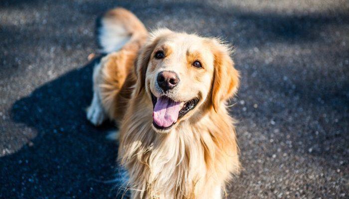 Собака-поводырь получила университетский диплом вместе с хозяйкой. И даже специальности совпали!