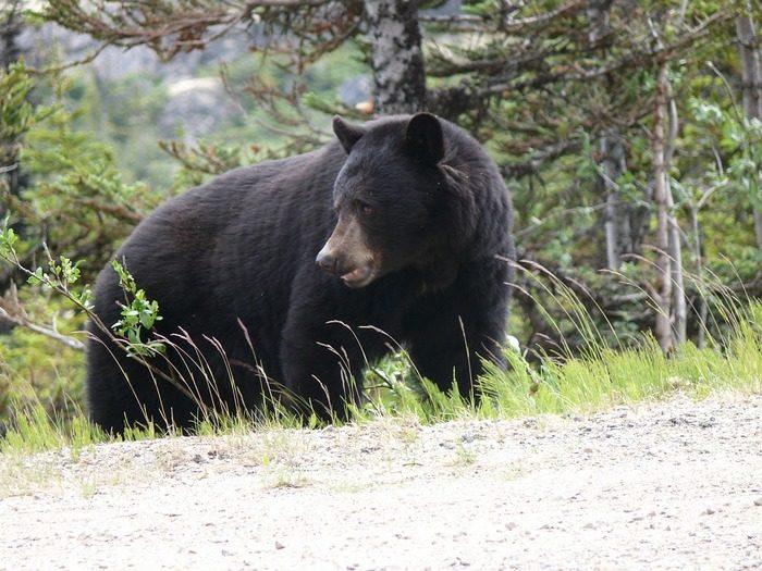 3-летний мальчик рассказал, что провёл два дня с медведем, когда потерялся в лесу
