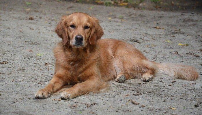 (Видео) Мужчина потерял сознание на улице. Его пёс встретил скорую помощь и привёл к хозяину