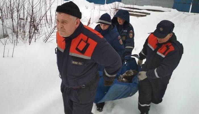 Бродячую рожающую овчарку вызволили из снежной ловушки в Подмосковье волонтёры и спасатели