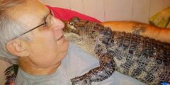 Этот аллигатор ведёт себя как собака и спасает пожилых людей от депрессии
