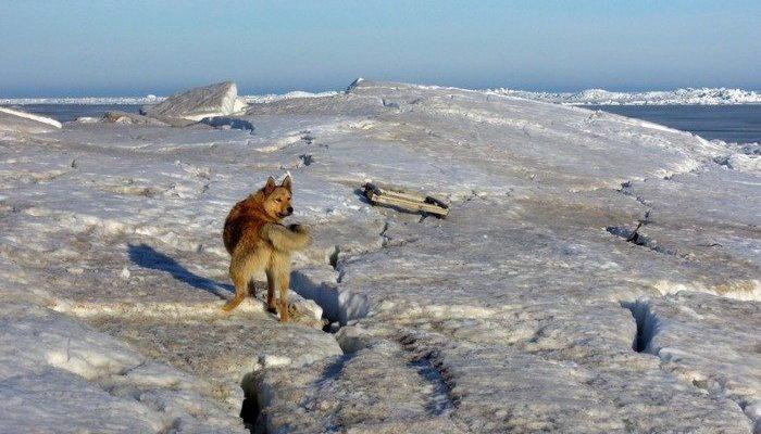 Две собаки устали и едва балансировали на льдинах. На помощь пришли рыбаки Владивостока