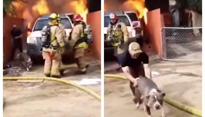 (Видео) Пожарные и очевидцы удивились, когда мужчина бросился в горящий дом. Они не знали, что там была его собака!