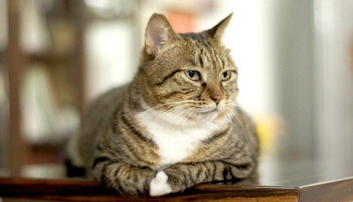 (Видео) Программист смастерил для кошек приют, который распознаёт морды животных и их заболевания