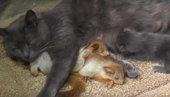 (Видео) В Крыму кошка стала мамой четырёх бельчат, и пользователи сети считают, что людям есть чему поучиться
