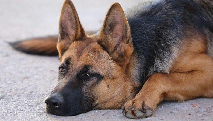 Почтальон не мог не исполнить последнее желание собаки своего клиента