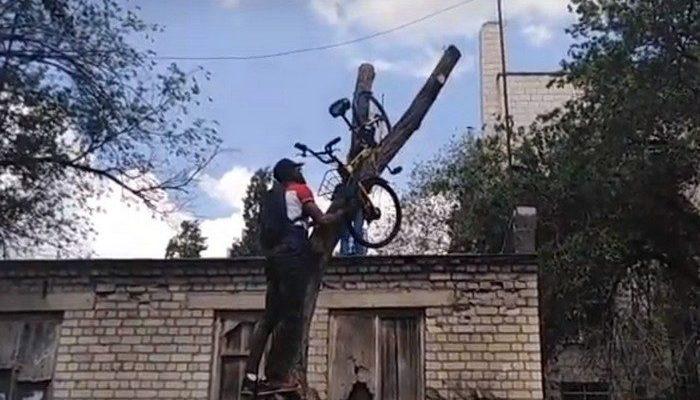 Прокатный велосипед забросили на дерево в Волгограде. Проходящие мимо иностранцы сняли его и вернули на место