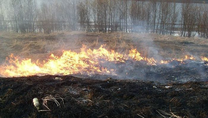 Четвероклассник проехал на велосипеде 5 км, чтобы успеть спасти лес от пожара!