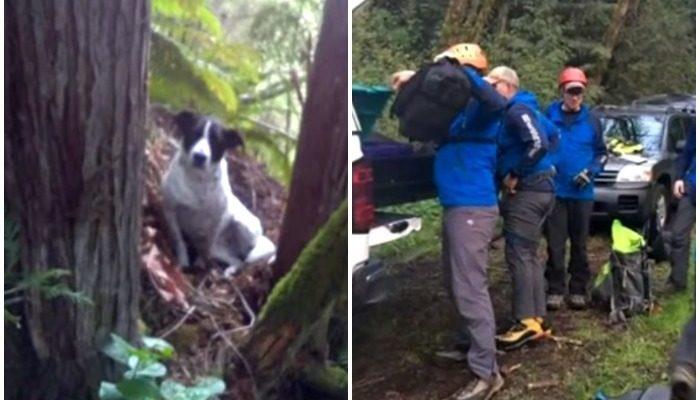 Погибшего в лесу мужчину спасатели нашли только благодаря его преданной собаке
