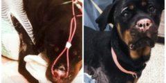 Собака получила серьёзные ожоги после пожара. Её спасла пересадка кожи трески