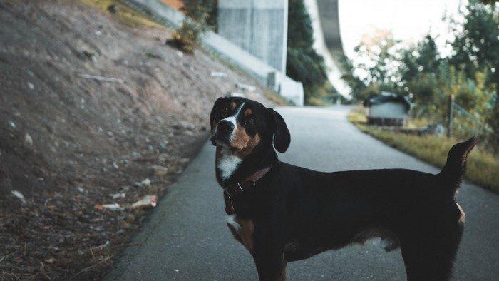 Бабушка невзлюбила взятую внучкой с улицы собаку. А пёс спас женщину от смерти!