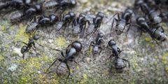 (Видео) Муравьи — герои! Они готовы рисковать жизнью, чтобы спасти собратьев из паутины