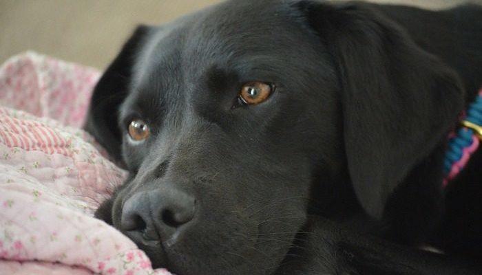 Фотография собаки у пустой кровати умершего хозяина тронула пользователей. Они очень хотели найти ей новый дом!
