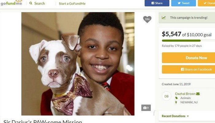 12-летний подросток шьёт галстуки-бабочки для бездомных собак, чтобы они поскорее обрели семью