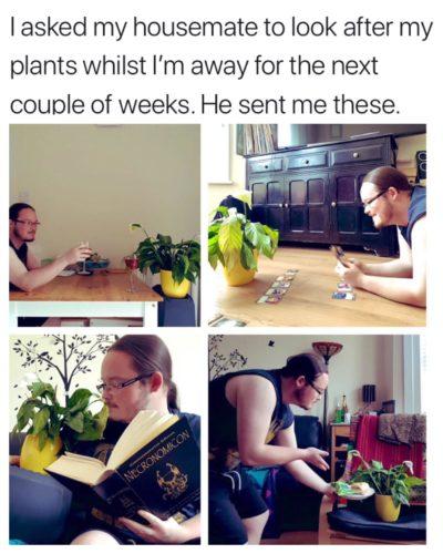 Мужчина подружился с цветком, за которым его попросила присмотреть соседка. И пользователи мечтают о таком друге!