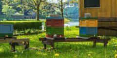 Голливудский актёр Морган Фримен приютил у себя на ранчо пчёл, потому что от них зависит 80% растительной пищи