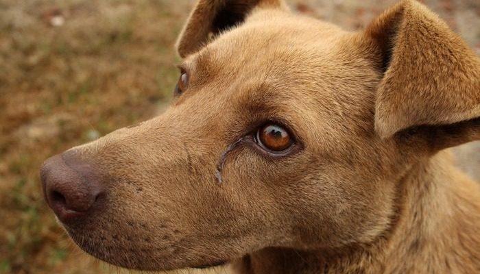 (Видео) Водители перекрыли движение на МКАД ради бродячей собаки