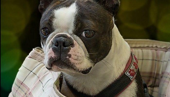 Воры не выдержали и вернули украденного пса. Разве можно устоять перед таким трогательным натиском в соцсетях?