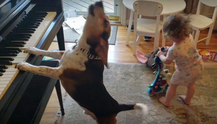 (Видео) Фееричный дуэт: пёс играет на пианино и поёт, а его маленькая хозяйка танцует!