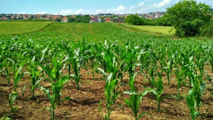 Как лабиринт из кукурузы поможет предотвратить самоубийства?