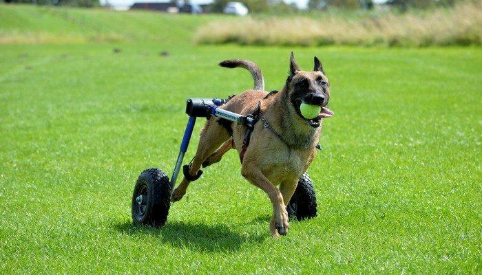 Его любят и люди, и животные! Парень без конца помогает соседям, а в свободное время мастерит инвалидные коляски для собак