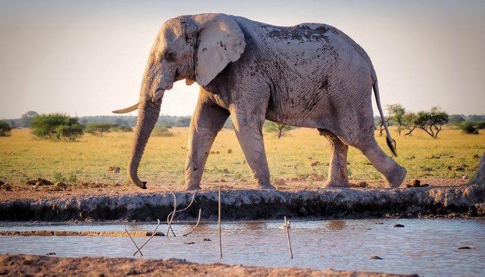(Видео) Жители деревни 3 часа действовали как один, чтобы вытащить слониху из ямы с водой