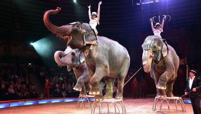 Тяжёлая жизнь индийских слонов-звёзд