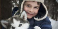 Теперь можно точно посчитать, сколько человеческих лет собаке (И они старше, чем мы думали!)
