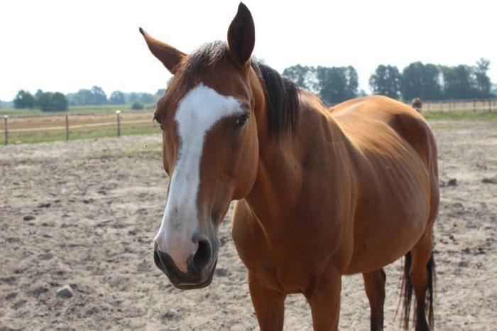 (Видео) Конь, по которому плачет Голливуд! Вредное животное разыгрывает целый спектакль, когда его хотят оседлать
