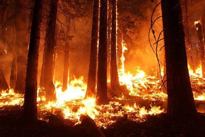 (Видео) Женщина не раздумывая бросилась в огонь, когда заметила зверька в горящем лесу