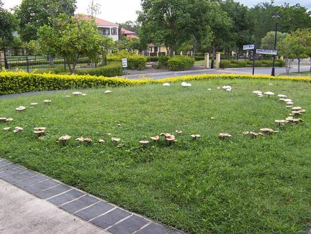 Мифическое кольцо грибов — дверь в сверхъестественное. Вы осмелитесь войти в ведьмин круг?
