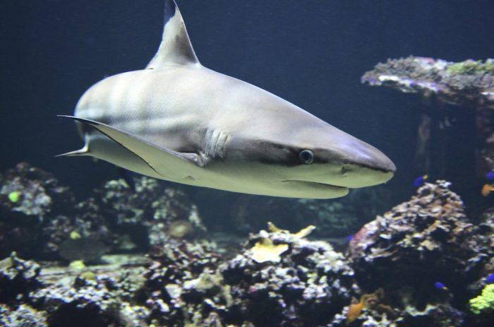 (Видео) Рыбак поделился необычным для себя роликом о спасении акулы. И на это даже смотреть страшно