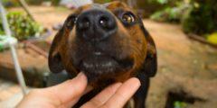 Бездомную лишили любимого пса, отомстившего её насильнику. Но для лучших друзей нашёлся герой!