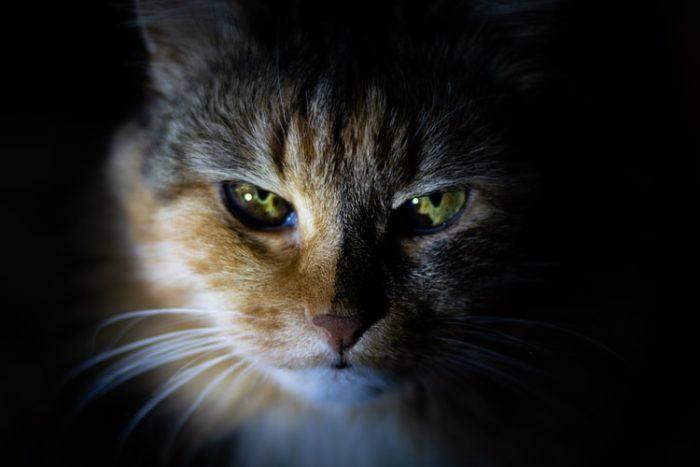 Девушка всем сердцем полюбила найденного на улице котёнка. Но с малышом пришлось расстаться, потому что он оказался не обычной кошкой
