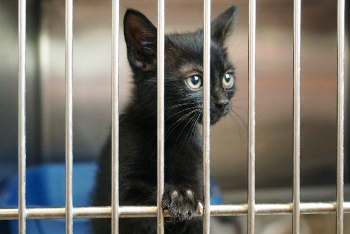 Девушка устроилась волонтёром в приют в память о пропавшем коте. А там её уже долгое время дожидался сюрприз