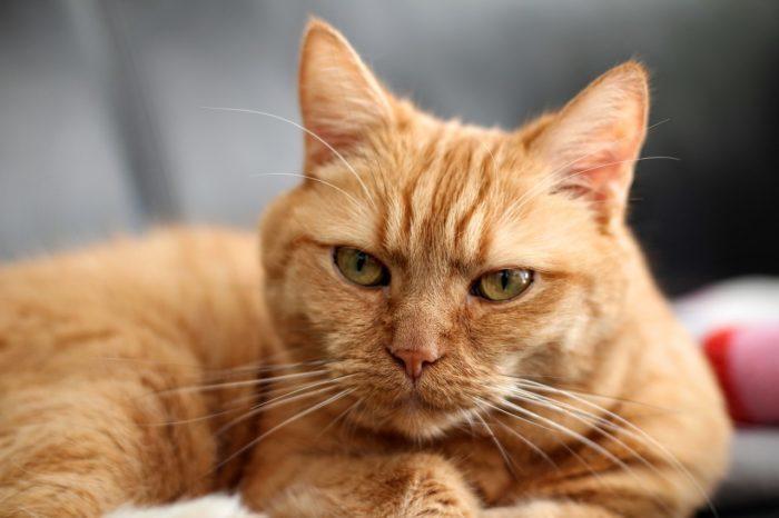 Кот-драчун лишился задних лап, но ветеринары смогли ему помочь. И теперь это кот-терминатор!
