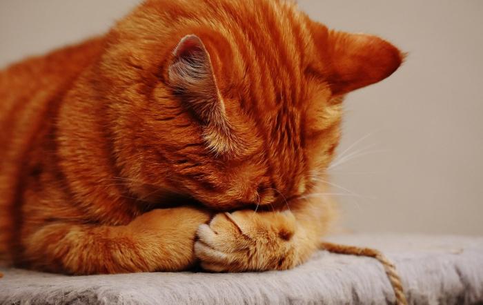 Убитый горем кот угасал после смерти хозяина. А потом сын умершего решил свозить его на могилу отца