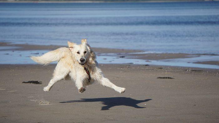 Собака наткнулась на маленького одинокого зверька и решила оставить его себе. Даже понесла знакомить с хозяевами!