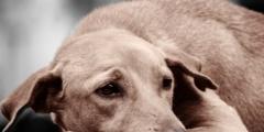 (Видео) Пёс едва не погиб, оставшись запертым в квартире китайского города Гуанчжоу. Хорошо, что соседка оказалась сообразительной