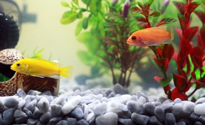 Изумлённый мужчина обнаружил в своём аквариуме странную улитку. Ему повезло, что он не стал её трогать