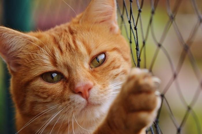 (Видео) Два года кошка провела в нише стены торгового центра. Помог ей выжить сердобольный работник магазина