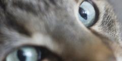 Кот в хирургической маске гуляет по Китаю. Его устрашающего вида испугается даже коронавирус