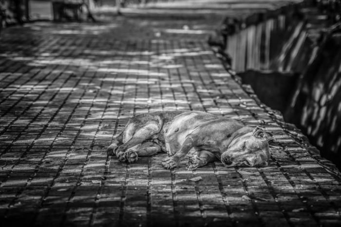 Облысевшего и едва живого пса подобрали на улице волонтёры. Теперь его не узнать!